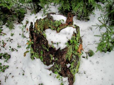 heart-on-stump